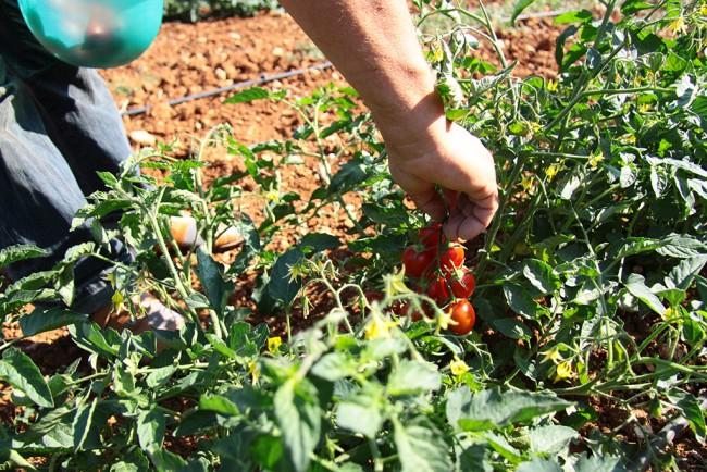 Azienda-agricola-masseria-monte-001